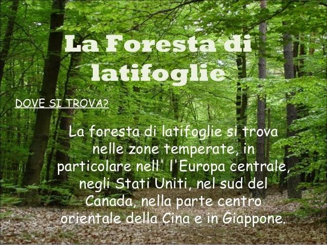 foreste dilatifoglio