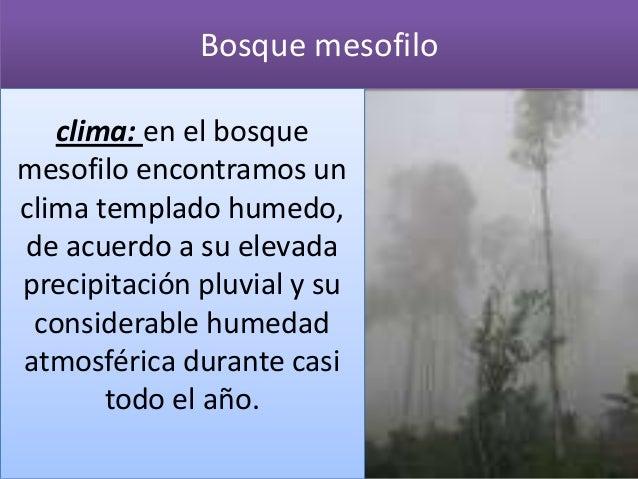 Bosque mesofilo   clima: en el bosquemesofilo encontramos unclima templado humedo,de acuerdo a su elevadaprecipitación plu...