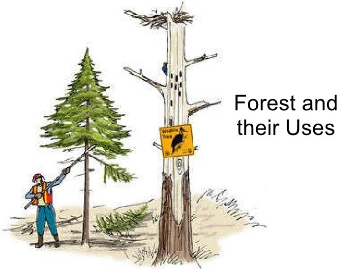 Forest and their Uses