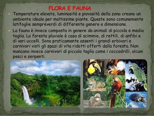 Foresta pluviale - Gli animali della foresta pluviale di daintree ...