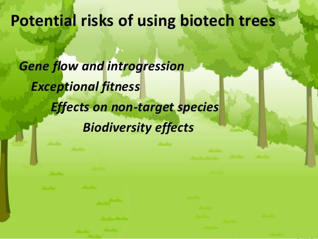 Master's Programme in Plant and Forest Biotechnology