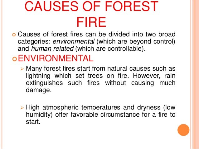 effect of forest fire on environment observation