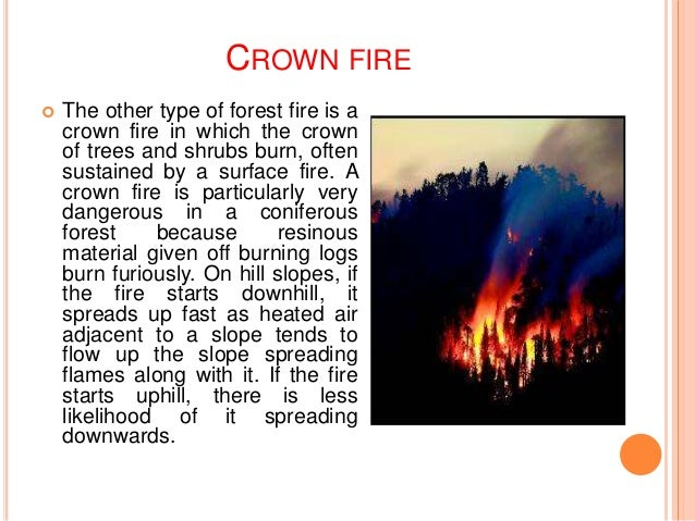 Forest fire a natural disaster