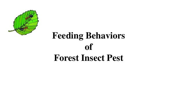 Feeding Behaviors of Forest Insect Pest