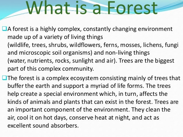 different types of forests essay Start studying 14 types of hook sentences with examples learn vocabulary, terms, and more with flashcards, games, and other study tools  argument essay terms and.