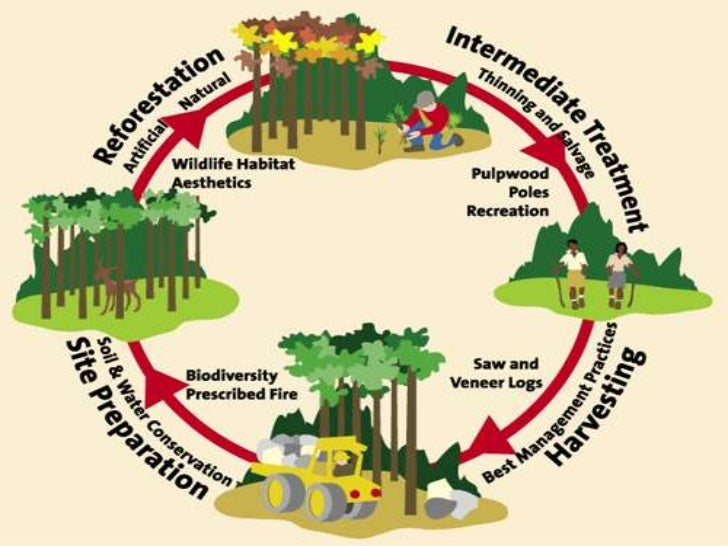 preventive measures of deforestation There is no single factor that is responsible for deforestation 272 comments on 5 big causes of deforestation and how you can stop it sign on with: click to add comment notify me of followup comments via e-mail boi 15 hours ago.
