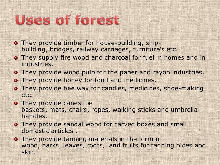 Usefulness of forests essays