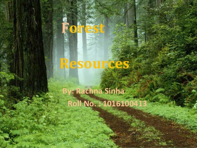 Forest Resources By: Rachna Sinha Roll No. : 1016100413