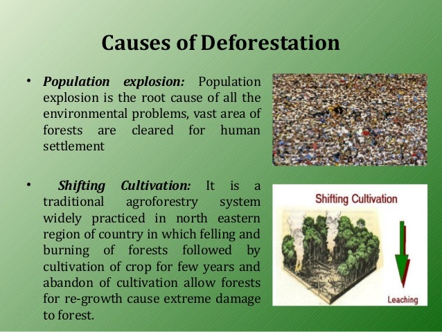 explain deforestation and its effects