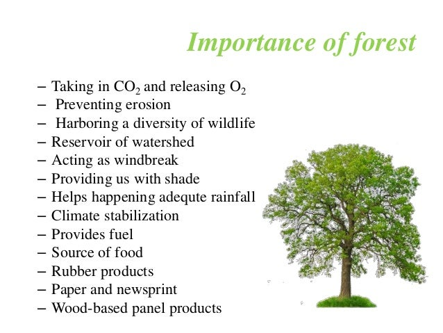 Essay on necessity of the conservation of forests