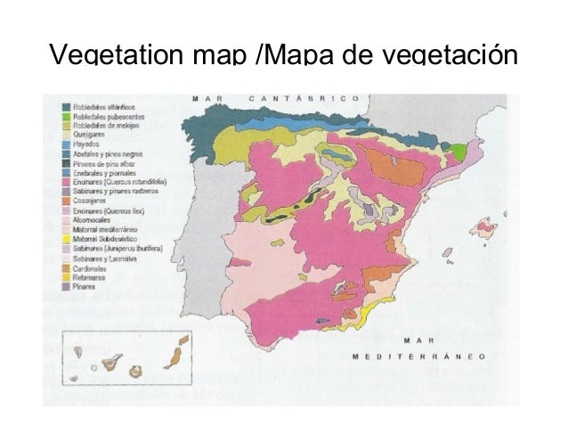 Vegetation map /Mapa de vegetación