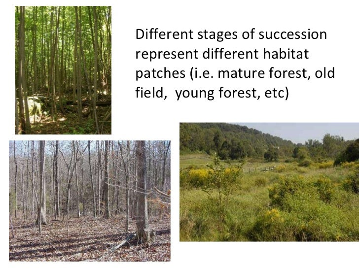 What are the different Types of Ecological Succession?