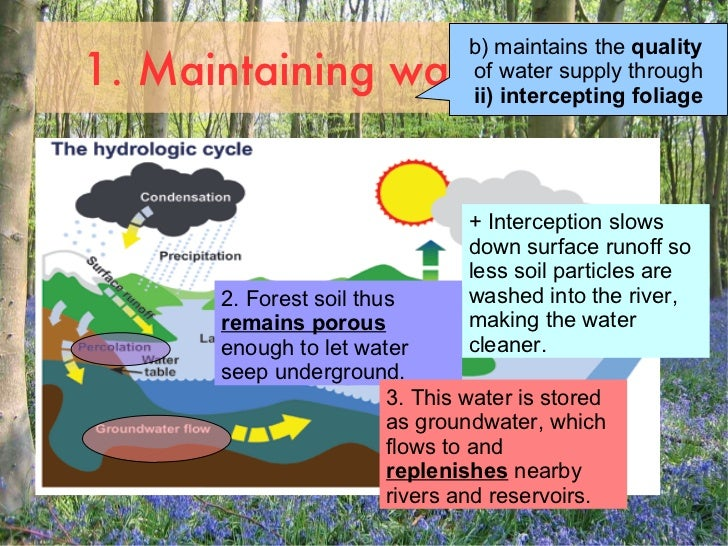 uses of forests The concept of multiple use forestry by marion clawson multiple  use as applied to forests is a popular term and idea, often involving substantial.