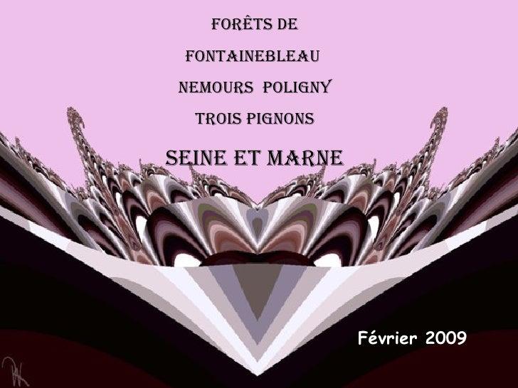 Forêts DE Fontainebleau  Nemours  poligny trois pignons Seine et marne Février 2009
