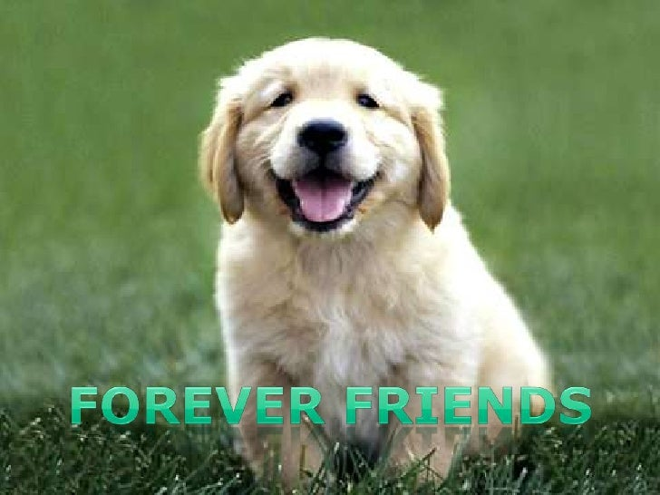 FOREVER FRIENDS<br />