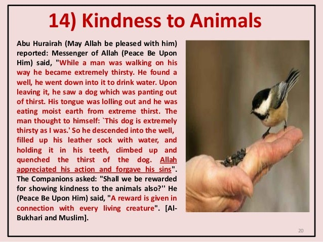 14) Kindness to Animals Abu Hurairah (May Allah be pleased with him) reported: Messenger of Allah (Peace Be Upon Him) said...