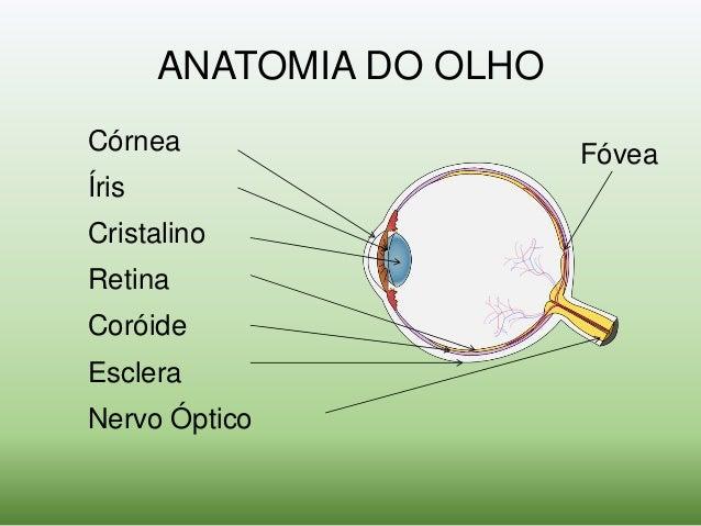 1047757c8 Óptica Oftálmica - Princípios Básicos