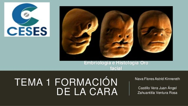 TEMA 1 FORMACIÓN DE LA CARA Nava Flores Astrid Kinnereth Castillo Vera Juan Ángel Zahuantitla Ventura Rosa Embriología e H...