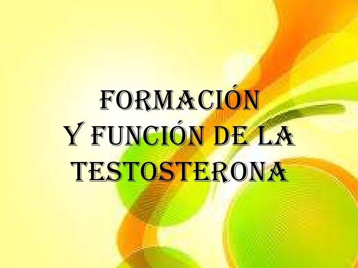 FORMACIÓNY FUNCIÓN DE LATESTOSTERONA