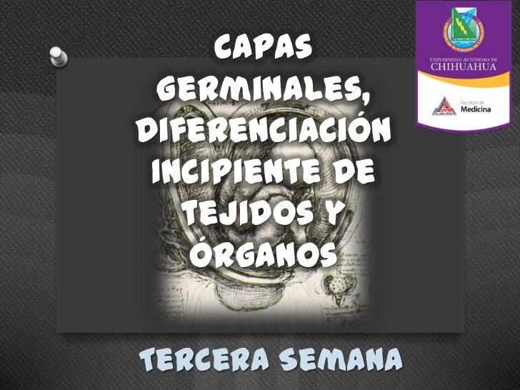 Capas  Germinales,Diferenciación Incipiente de   tejidos y    órganosTercera Semana