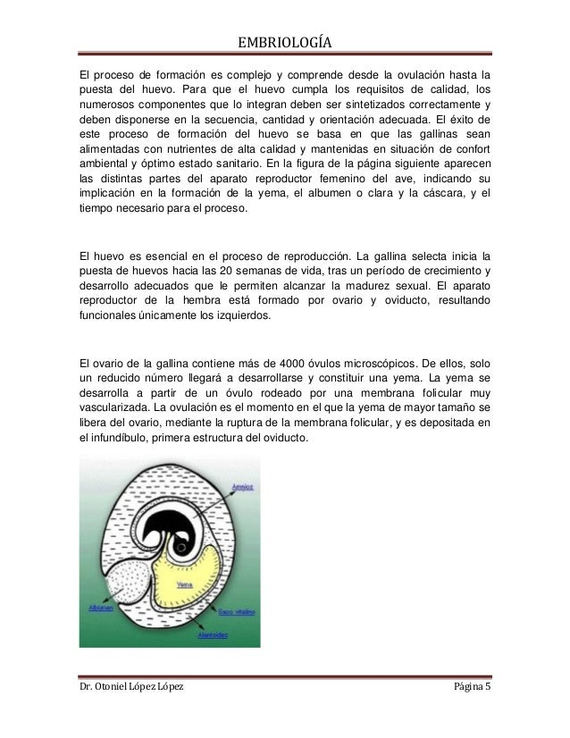 El Proceso De Formacin Del Huevo En La Gallina | Car Release Date