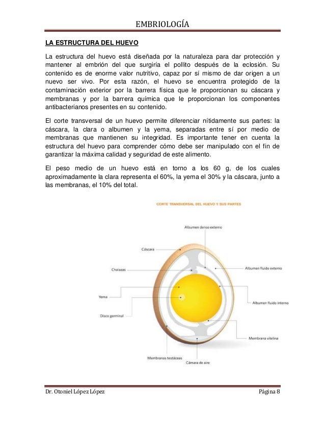El Proceso de Formacin del Huevo en la Gallina
