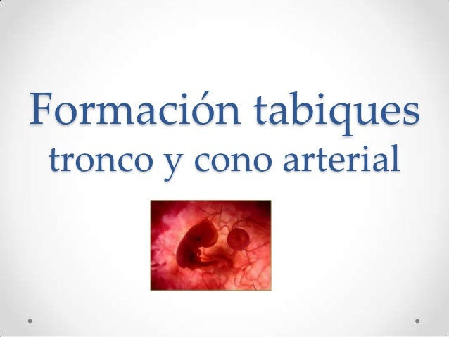 Formación tabiquestronco y cono arterial