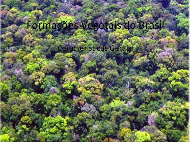 Formações Vegetais do Brasil Características Gerais