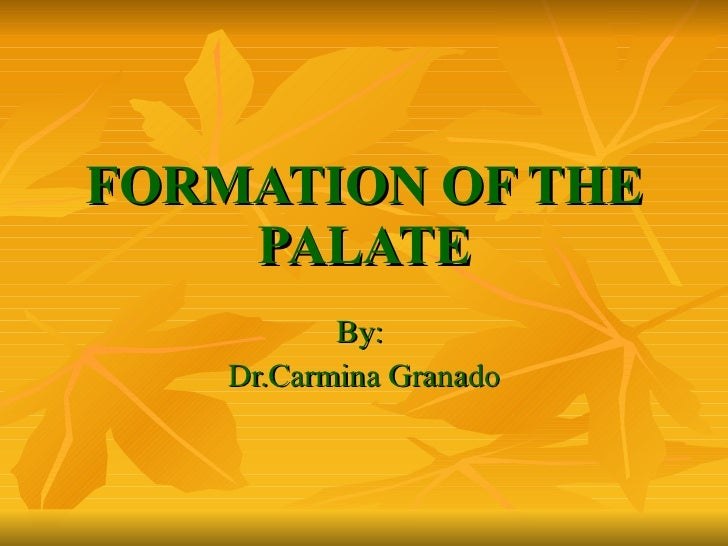 FORMATION OF THE PALATE By:  Dr.Carmina Granado