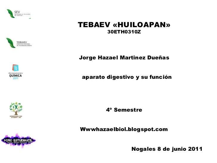 TEBAEV «HUILOAPAN» 30ETH0310Z Jorge Hazael Martinez Dueñas aparato digestivo y su función 4º Semestre Wwwhazaelbiol.blogsp...