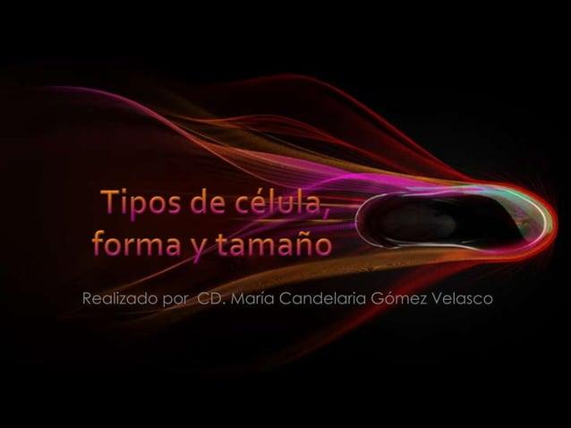 Realizado por CD. María Candelaria Gómez Velasco