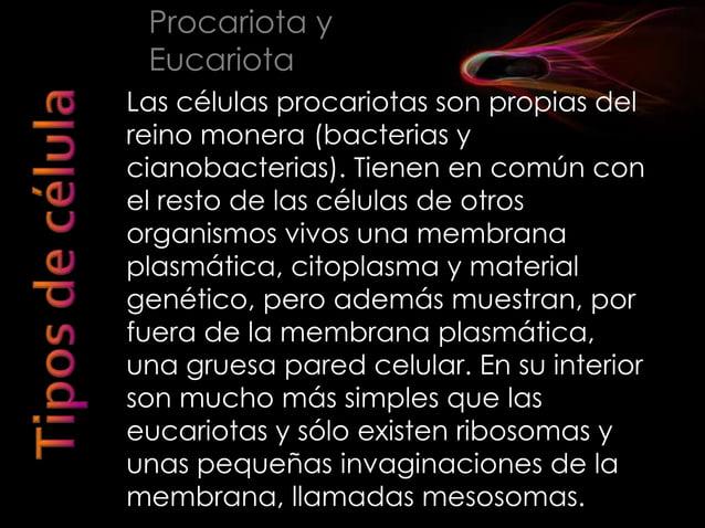 No presentan núcleo y su ADN se encuentra más o menos condensado en una porción del citoplasma llamada nucleoide son unice...