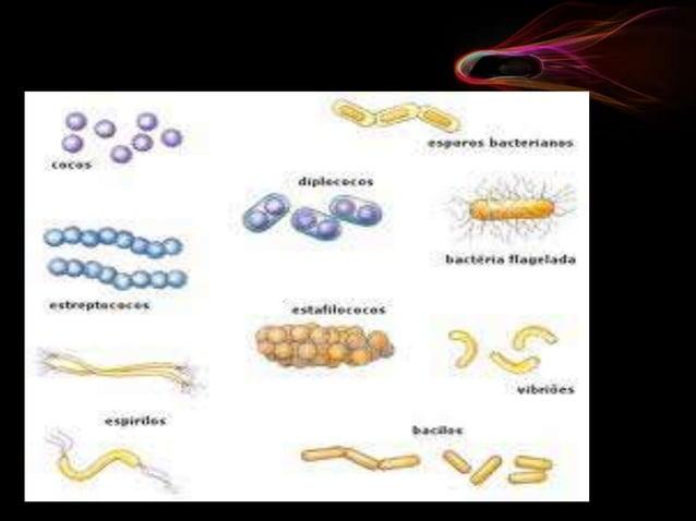 dentro de este tipo encontramos las células de los organismos de los reinos protista, fungi, vegetales y animales. Las cé...