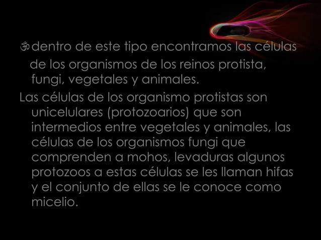 pared vegetal, y una gran vacuola que ocupa un gran volumen citoplasmático. La célula animal no presenta los orgánulos an...