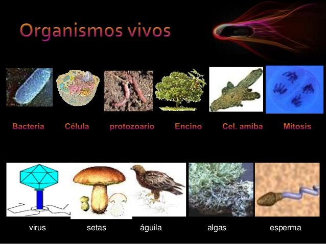 virus  setas  águila  algas  esperma