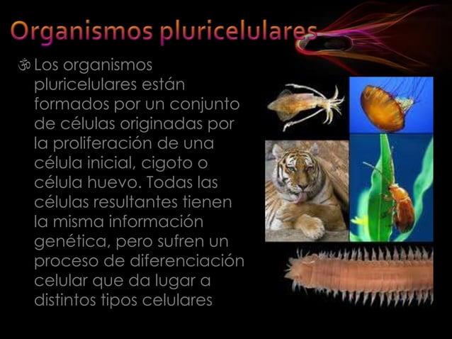 La especialización en los tejidos animales es fantástica. Existen más de 200 tejidos animales diferentes, dentro de un mi...