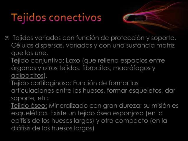  Definitivos: están distribuídos por la planta en tres tipos de sistemas:   Sistema fundamental: Con tres tipos de tejid...