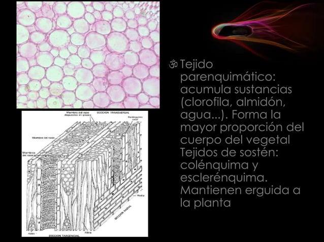 Los aparatos o sistemas Los órganos que intervienen en la misma función se asocian en aparatos o sistema El organismo: L...