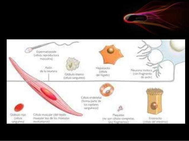 La biología es una area muy rica visualmente. Sin embargo muchas de las estructuras y eventos biológicos más interesantes...