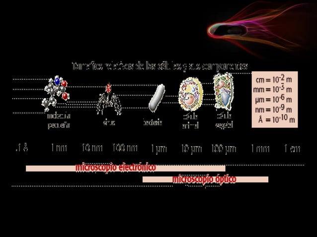 Forma y tamaño celular