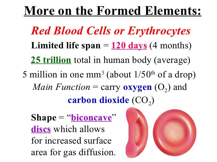 Image result for formed elements