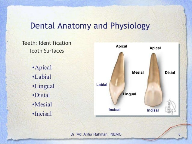 Basics Of Dentistry