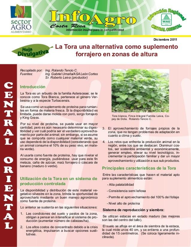 al  Di  ión Regio ecc n r  CEN  L T R A L O RIE NTA  Diciembre 2011  La Tora una alternativa como suplemento forrajero en ...