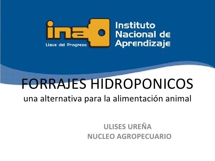 FORRAJES HIDROPONICOSuna alternativa para la alimentación animal                   ULISES UREÑA                NUCLEO AGRO...