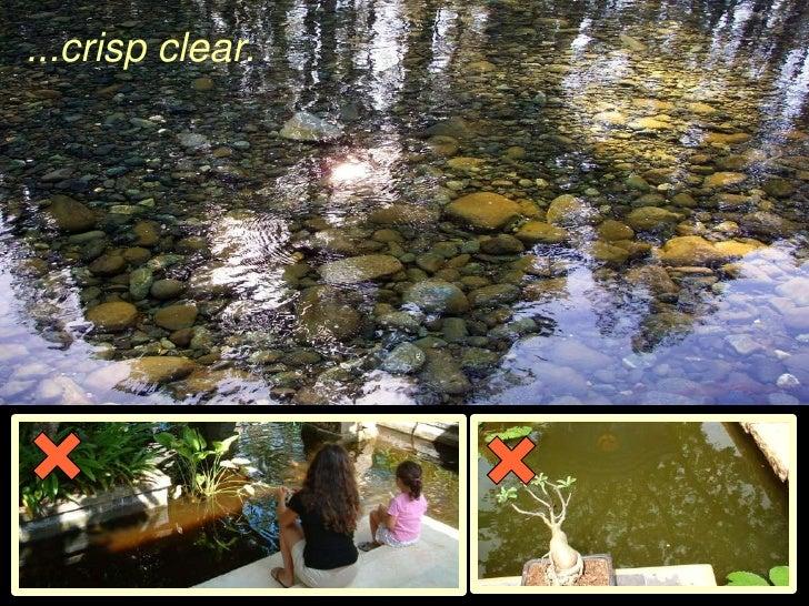 A natural approach to garden pond management for Garden pond management