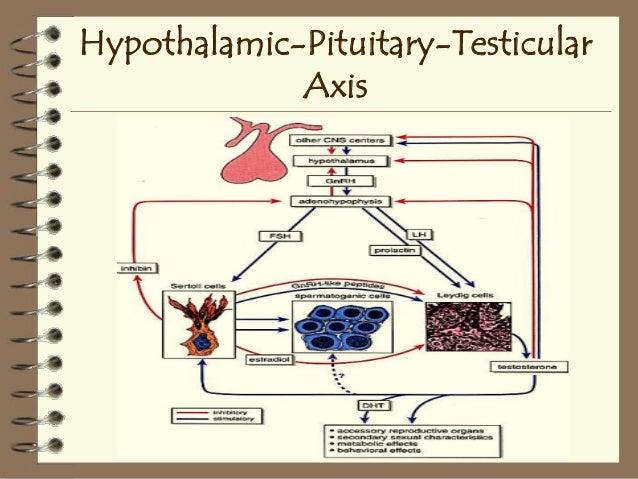 hypogonadotropic hypogonadism anabolic steroids