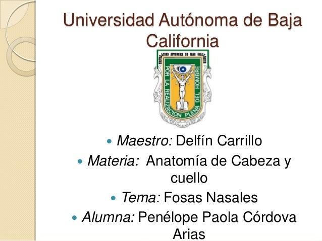 Universidad Autónoma de Baja California  Maestro: Delfín Carrillo  Materia: Anatomía de Cabeza y cuello  Tema: Fosas Nas...