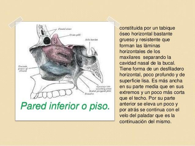 Fosas nasales for Pared lateral de la cavidad nasal