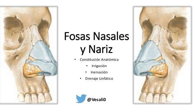 Anatomía Fosas nasales y nariz