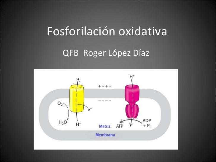Fosforilación oxidativa QFB  Roger López Díaz